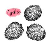 Ink sketch set of lychee fruits. Royalty Free Stock Photos