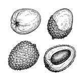 Ink sketch set of lychee fruits. Stock Photo