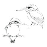 Ink sketch of small bird kingfisher royalty free illustration