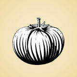 Ink Sketch of a Tomato with White Fill Royalty Free Stock Photos