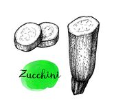 Ink sketch of zucchini. Zucchini. Ink sketch isolated on white background. Hand drawn vector illustration. Retro style stock illustration