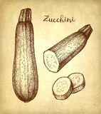 Ink sketch of zucchini. Zucchini. Ink sketch on old paper background. Hand drawn vector illustration. Retro style stock illustration