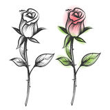 Ink sketched and colorful roses royalty free illustration