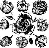 Ink teckningar av olika blommor på en vit bakgrund Royaltyfri Foto