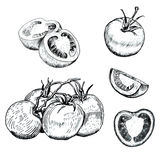 Ink tomatoes sketches set. Hand drawn ink tomatoes sketches set. Outline retro style. Isolated Royalty Free Stock Photo