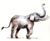 Big elephant. Ink and watercolor illustration of a big elephant animal Royalty Free Stock Photos
