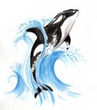 Jumping orca whale. Ink and watercolor illustration of a jumping orca whale Royalty Free Stock Photography