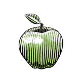 Ink and Watercolor Sketch of an Apple Stock Photography