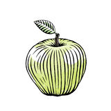 Ink and Watercolor Sketch of a Green Apple Stock Photography