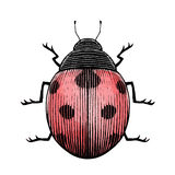 Ink and Watercolor Sketch of a Ladybug Royalty Free Stock Photo