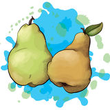 Ink and Watercolor Style Pears Royalty Free Stock Photo