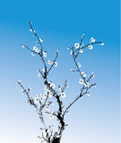 Ink winter sweet. Chinese ink paint of wintersweet, eps10 file contains transparency Royalty Free Stock Photos