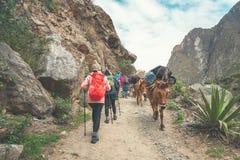 Inka ślad, Peru: Sierpień 11th, 2018: Grupa wycieczkowicze chodzi na sławnym inka śladzie z chodzącymi kijami Potrzebują obrazy stock