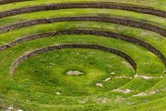 Inka kurenda tarasuje w murenie, w Świętej dolinie, Peru fotografia stock
