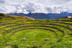 Inka kurenda tarasuje w murenie, w Świętej dolinie, Peru obraz stock