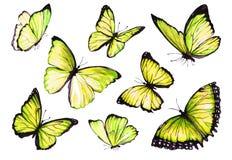 Inkasowa akwarela latający motyle Zdjęcie Royalty Free
