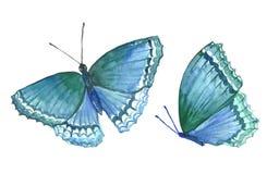 Inkasowa akwarela latający motyle Obrazy Stock