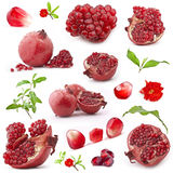 inkasowa owoc granatowa czerwień Zdjęcie Royalty Free
