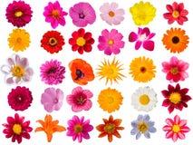 inkasowi dekoracyjni kwiaty Zdjęcia Royalty Free