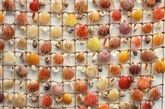 inkasowi seashells Fotografia Stock