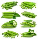inkasowy świeży zielony groch Zdjęcie Stock