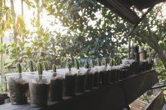 Inkasowy kaktus w plastikowym szklanym garnku na drewnianym balkonie życia pojęcie, wciąż fotografia stock