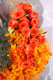 inkasowy kwiat Fotografia Royalty Free