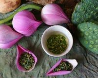 Inkasowy lotosowy kwiat, ziarno, herbata, zdrowy jedzenie Fotografia Royalty Free
