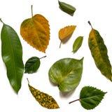 Inkasowy różnorodny zieleni liście zdjęcia stock