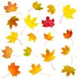 Inkasowy ustawiający piękna colourful jesień odizolowywająca opuszcza Fotografia Stock