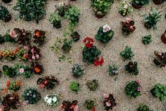 Inkasowy ustawiający houseplants w kwiatu garnku na ziemi, Odgórny v Zdjęcia Royalty Free