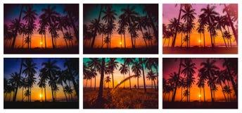 Inkasowy wizerunek sylwetki kokosowy drzewko palmowe na plaży przy słońcem Fotografia Stock