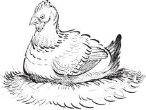 Inked Chicken. A calligraphic stylized illustration of a fat hen sitting on her nest Royalty Free Stock Photos
