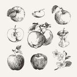 Inkt getrokken inzameling van appelen Royalty-vrije Stock Foto