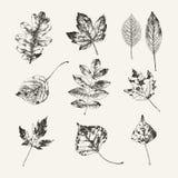 Inkt getrokken inzameling van de herfstbladeren Stock Foto