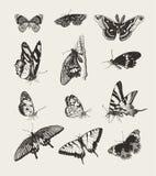Inkt getrokken vlinders Royalty-vrije Stock Foto's