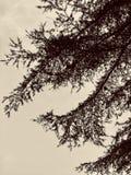 Inkt het schilderen door cederbladeren royalty-vrije stock foto