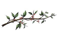 Inkthand getrokken tak met roze bloemen Stock Afbeelding