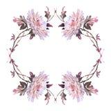 Inktillustratie van bloemenkader met crhysanthemumbloemen Royalty-vrije Stock Afbeeldingen