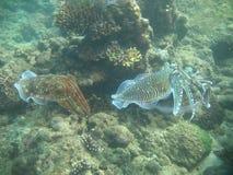 Inktvissen stock foto