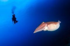 Inktvissen en duiker Royalty-vrije Stock Afbeeldingen