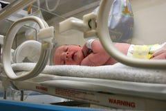 inkubator Obrazy Royalty Free