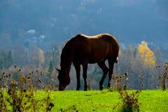 Inkvartera hästen sätter in in Arkivbild