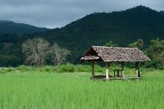 Inkvartera i ricefältet. Arkivbild