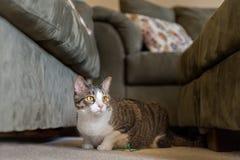 Inländische Cat Lies Between Couches Lizenzfreie Stockbilder