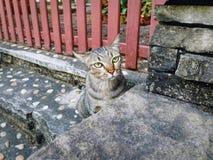 Inländische Cat Sitting auf dem Treppen-Schritt, der vorsichtig etwas betrachtet lizenzfreie stockfotografie