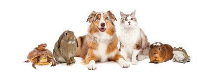Inländische Haustier-Zusammensetzung Stockfoto