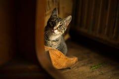 Inländische junge weibliche Katze Stockfoto