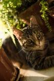 Inländische junge weibliche Katze Lizenzfreie Stockfotografie