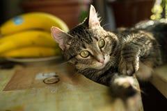 Inländische junge weibliche Katze Stockfotos